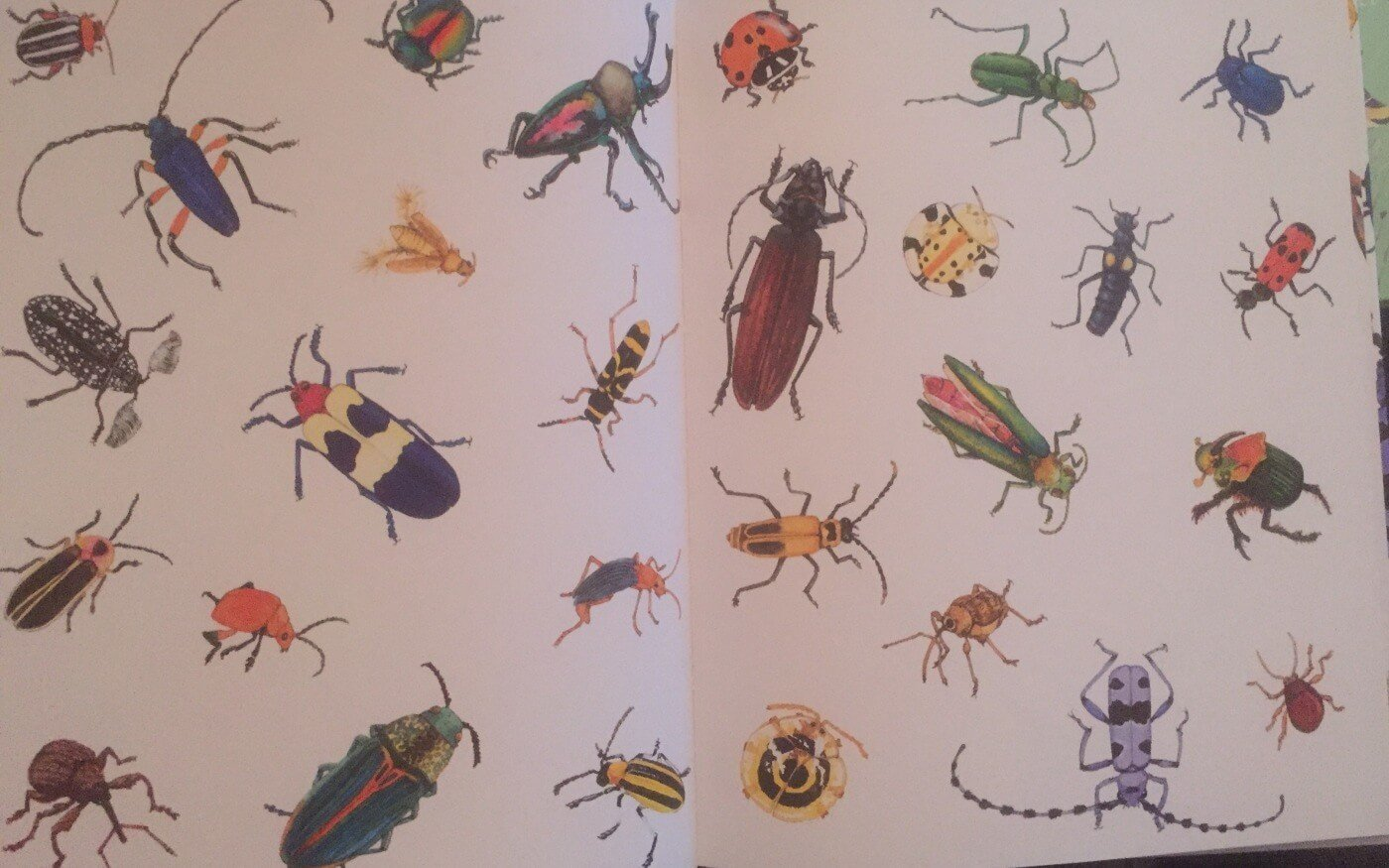 Books for bug fans